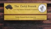 The Cesky Fousek