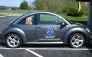Durefy's Dogs Car Graphics